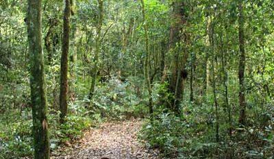 mocona-senderos